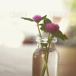 花の写真・画像素材[619651]