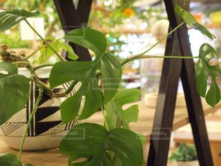 インテリアショップの観葉植物 - No.763096