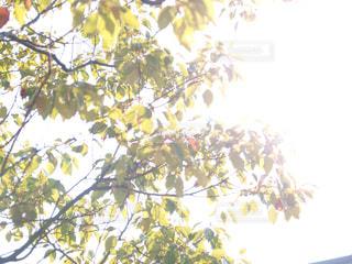 木の枝にとまった鳥の写真・画像素材[865014]