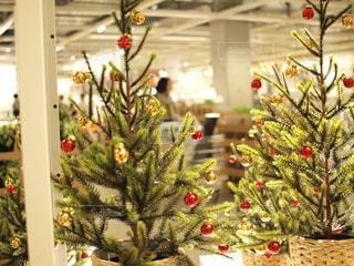 クリスマス ツリーの写真・画像素材[865104]