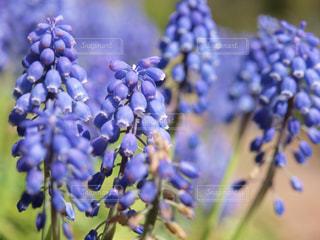 近くの花のアップの写真・画像素材[1005025]