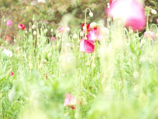 近くの花のアップの写真・画像素材[1005027]