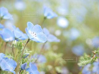 近くの花のアップの写真・画像素材[1005029]