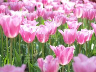 近くにピンクの花の束のアップ - No.1005032