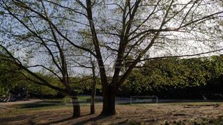 公園の木の写真・画像素材[1127038]