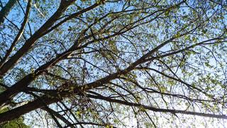 近くの木のアップの写真・画像素材[1127039]