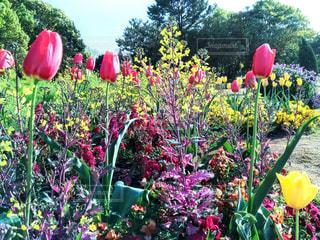 花畑の写真・画像素材[1127060]
