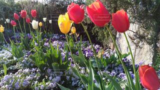 植物の赤い花の写真・画像素材[1127065]