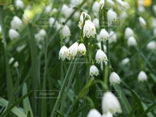 近くの花のアップの写真・画像素材[1129407]