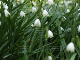 植物の白い花の写真・画像素材[1129408]