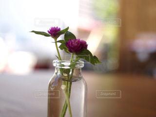 紫色の花一杯の花瓶の写真・画像素材[1210407]