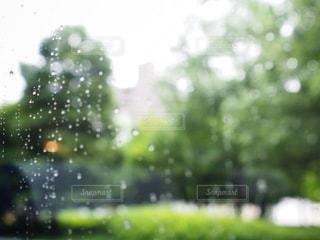 雨粒の写真・画像素材[1227984]