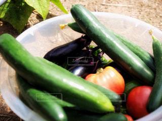 採れたて野菜の写真・画像素材[1316743]