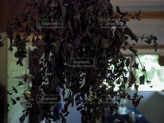 木の枝に花の花瓶の写真・画像素材[1355082]