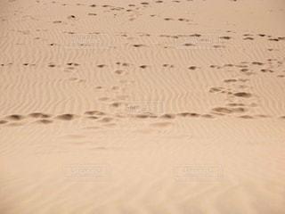 砂丘の写真・画像素材[1355116]