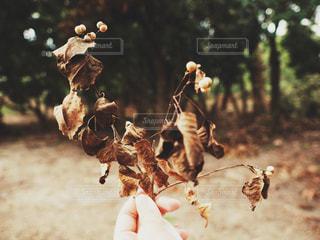 花を持っている手の写真・画像素材[1450624]