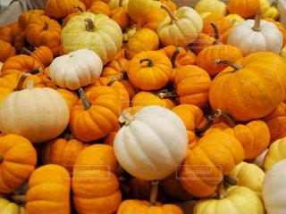 かぼちゃの写真・画像素材[1457753]