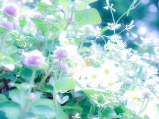 植物の写真・画像素材[1569310]