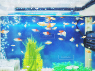 水槽の魚の写真・画像素材[1674704]