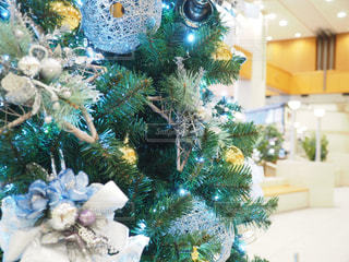 クリスマスツリーの写真・画像素材[1686115]