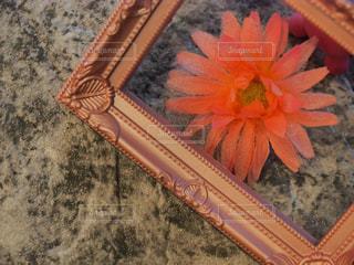 近くの花のアップの写真・画像素材[1820591]