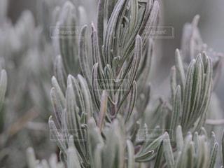 近くの花のアップの写真・画像素材[1822157]