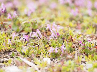 近くの花のアップの写真・画像素材[1849200]