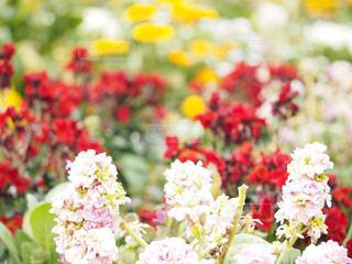 近くの花のアップの写真・画像素材[1849204]