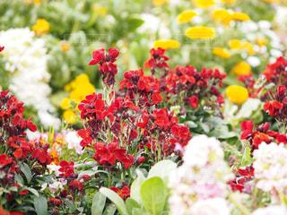 近くの花のアップの写真・画像素材[1849205]