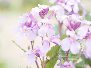 近くの花のアップの写真・画像素材[1849207]