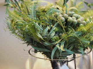 植物の花の花瓶の写真・画像素材[1869958]