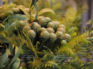 植物の写真・画像素材[1869960]
