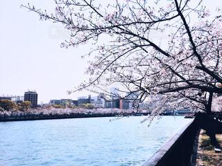 桜と川の写真・画像素材[2019666]