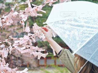 傘の写真・画像素材[2028536]