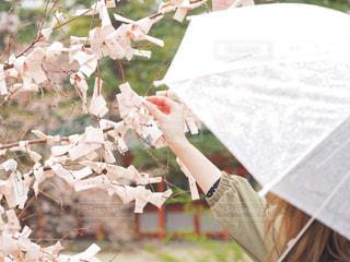 おみくじの木の写真・画像素材[2047950]