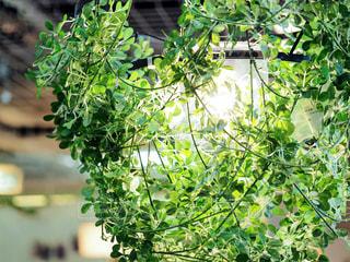 植物のクローズアップの写真・画像素材[2439464]