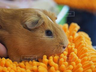 ネズミの写真・画像素材[2791180]