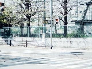 春の陽射しの写真・画像素材[3134556]