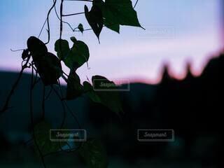 夕方の空を窓越しに眺めるの写真・画像素材[3879656]