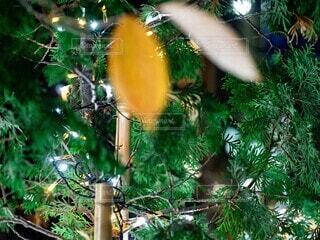 クリスマスのライトアップの写真・画像素材[3946238]