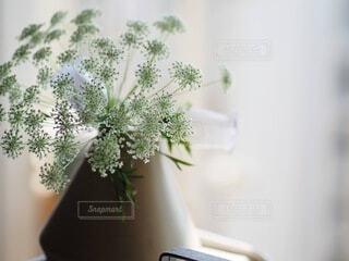 花瓶の写真・画像素材[4156491]