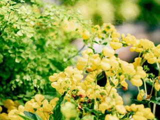 黄色い花の写真・画像素材[4303136]