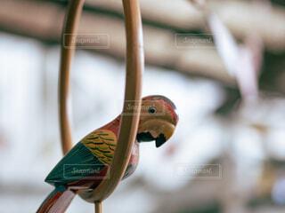 インコのおもちゃの写真・画像素材[4358094]