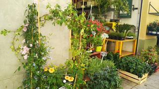 プロヴァンスの花屋さんの写真・画像素材[929347]