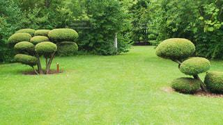 庭園のもこもこ - No.929377