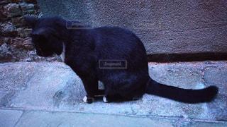 下を向く黒猫の写真・画像素材[929486]