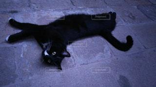 地面に横たわっている黒猫の写真・画像素材[929487]