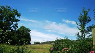 あたたかい日差しの午後の写真・画像素材[934347]