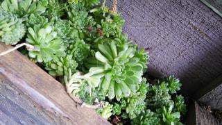 かわいい多肉植物の写真・画像素材[945708]