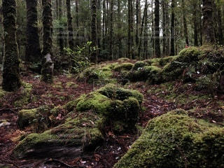 屋久島の森の写真・画像素材[928315]